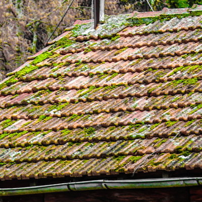How do I stop moss growing on roof shingles and tiles?