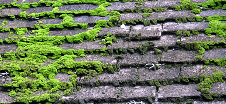 How Do I Stop Moss Growing On Roof Shingles And Roof Tiles