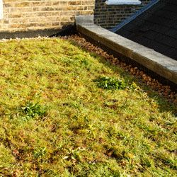 Full Wildflower Eco Green Roof - Priced per m2