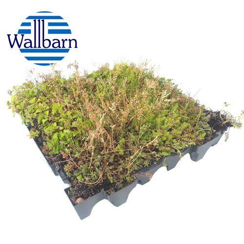 Wallbarn M Tray Modular Sedum Green Roof 540mm X 540mm