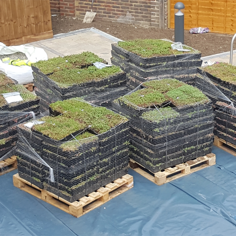 Wallbarn M Tray Modular Sedum Green Roof 500mm X 500mm X